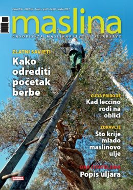Maslina - naslovnica